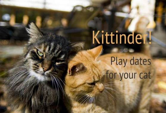 Kittinder